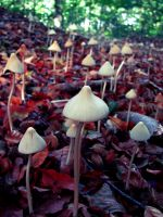 an army of mushrooms by rockmylife