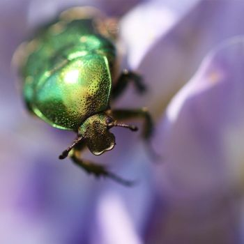 green bug by Vantavo