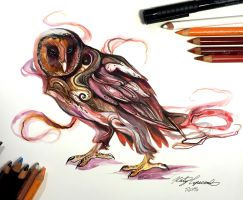 314- Melanistic Barn Owl by Lucky978