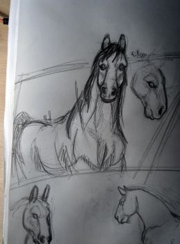 horses sketch by MaylaDR93