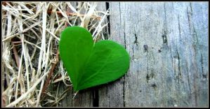 Love Green by JMcCarty09
