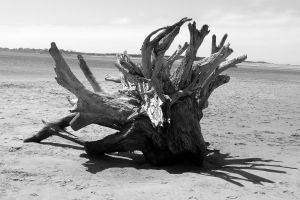 Driftwood Root by cloudwatcher1
