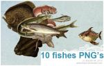 10 fishes PNG by addictedsp8
