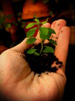 My little plant. by Complexo