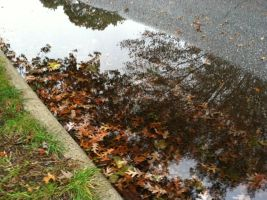 Autumn Puddle by Idellechi