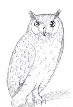Owl Sketch by waterdrup