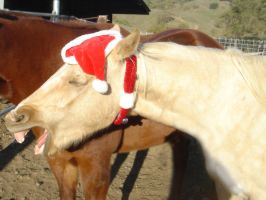 Horse Chirstmas 13 by rachellafranchistock