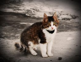 My cat by NaViGa7or