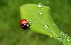 Coccinnelle 22 by eco6org
