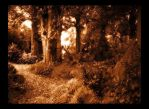 The Enchanted Forest by Forestina-Fotos