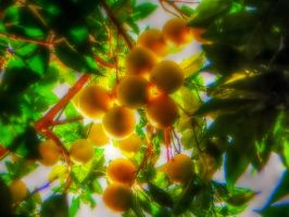 Oranges 2 by BL00DYSunflowers
