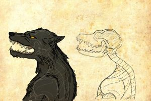 Werewolf Anatomy: Head Profile by catgirl123