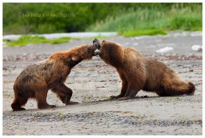 Battle at Katmai part I by Nate-Zeman