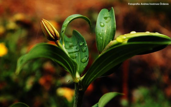 the rain stopped by Andreamacka
