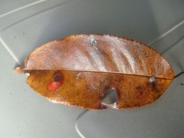 Religious Leaf by RebeKahsOwnPlace