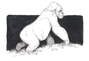 Gorilla - Inktober by sterlingy