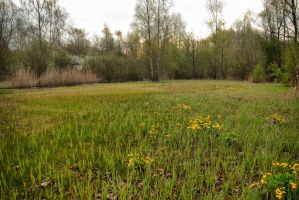 Reed Corner Meadow HDR by steppeland