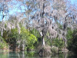 Weeki Wachee River 10 by crazygardener