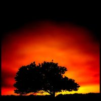 Burning tree II ... by MOSREDNA