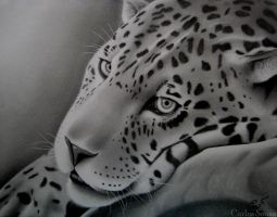 Resting leopard by carlos-sousa-13