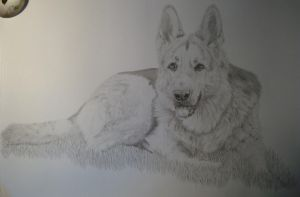 German Shepherd Dog by Smok15