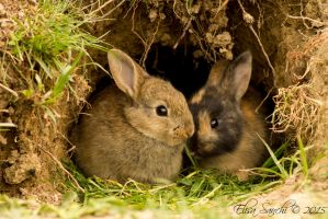 Two little bunnies by Cadaverino89