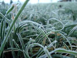 winter grass by LiLi-Princess-94