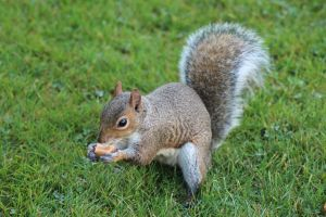 The hungry lone squirrel by TheGoldenArtist6