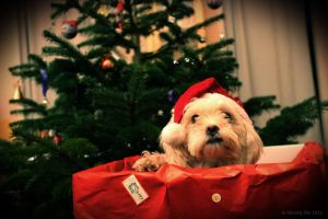 Merry Christmas by matheist