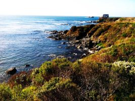 Elephant Seal Point by LaurenCalaway