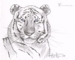 White tiger by Keila-the-fawncat