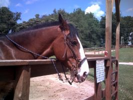 Clydesdale Horse Stock 2 by PintabianDreamer1222