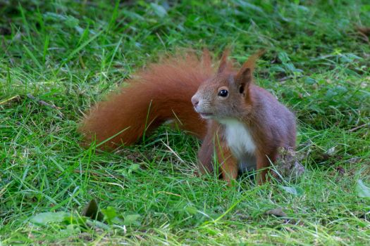Squirrel by OliverBPhotography