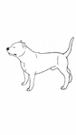 American Staffordshire Terrier Lineart Free by AnimeLuvr12