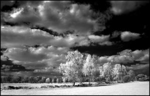 Springtime infrared... by MichiLauke