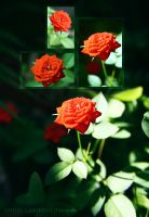 Red Flower by Almirith7