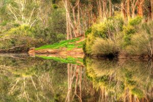 Serendip Reflections 2 by daniellepowell82