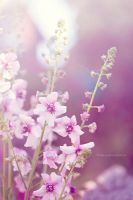 Pink Flowers by Lady-Ro
