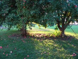 Apple Orchard by JewelsStock