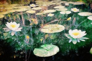 Water Lily 2 by maxxparis