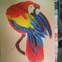 Parrot by Maudpx