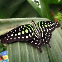 Green Butterfly by GirlWithAHat