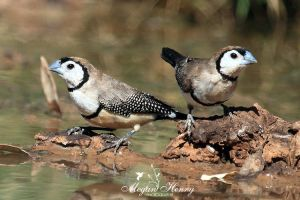 More Finches!! by OutbackReality