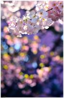 Cherry Blossom 1 by simzcom
