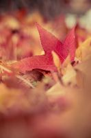 Autumn Leaves by TonyEP