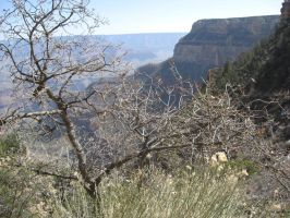 Grand Canyon 2 by FoxMcCarther