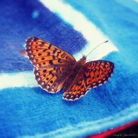 Fly fly butterfly by Iulia-Oprinesc