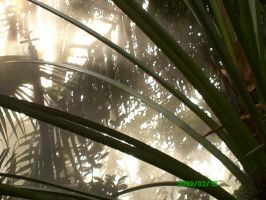 cool plants and mist by Joe666Cool