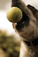 Tennis Ball Diet by Genetrix205
