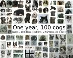 1 year, 100 dogs by Captured-In-Pencil